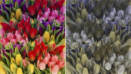 Как видят цветы дальтоники