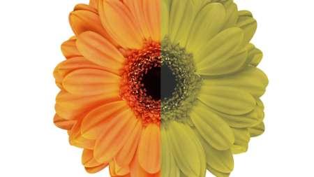 как дальтоник видит цветок