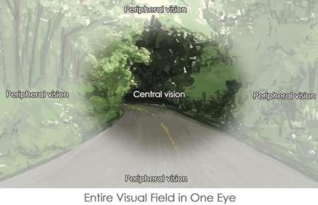 разеделение центрального и перефирийного зрения одного глаза