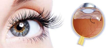 глаз девушки со строением глазного яблока